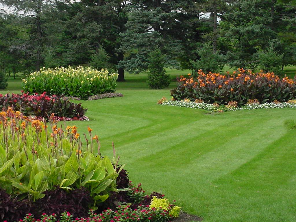 Nation green lawn care for Best grass for landscaping